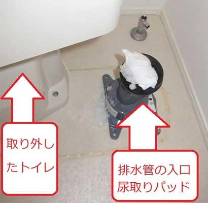 排水管の入口に尿取りパッドが引っかかってつまっていました。